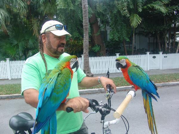 Nancy Forrester S Secret Garden Large Macaws Key West Fl,Smoked Salmon Bagel